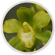Rare Green Orchid Round Beach Towel