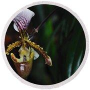 Rare Orchid - Paphiopedilum Gratrixianum Round Beach Towel