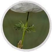 Reaching To The Top Round Beach Towel