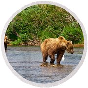 Ready To Pounce On A Salmon  In The Moraine River In Katmai National Preserve-ak Round Beach Towel