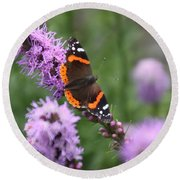Red Admiral Butterfly On A Blazing Star Round Beach Towel