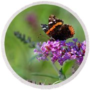 Red Admiral Butterfly On Butterfly Bush Round Beach Towel
