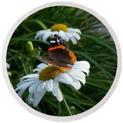 Red Admiral On A Daisy Round Beach Towel