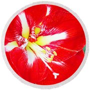 Red Amaryllis Round Beach Towel