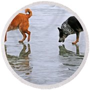 Red And Blue Heelers Round Beach Towel