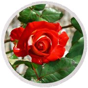 Red And Cream Rose Round Beach Towel