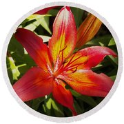 Red And Orange Lilly In The Garden Round Beach Towel