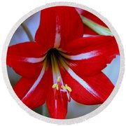Red And White Lilly Round Beach Towel by Debra Forand