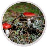 Red And White Mushrooms Round Beach Towel