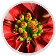 Red And White Poinsettia Flower Round Beach Towel by Catherine Sherman