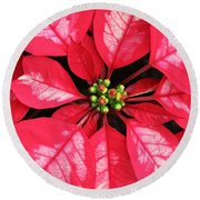 Red And White Poinsettia Round Beach Towel