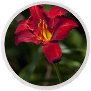 Red And Yellow Daylily  Round Beach Towel