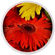 Red And Yellow Glory - The Flowers Of Summer - Gerbera Daisies Round Beach Towel