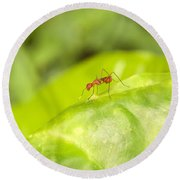 Red Ant On Green Leaf Round Beach Towel