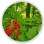 Red Baneberry Along Rivier Du Nord Trail In The Laurentians-qc Round Beach Towel