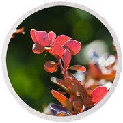 Red Barberry Round Beach Towel