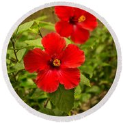 Red - Beautiful Hibiscus Flowers In Bloom On The Island Of Maui. Round Beach Towel