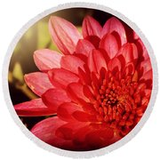 Red Beauty Welcomes The Sun - Flowers Of Summer Round Beach Towel
