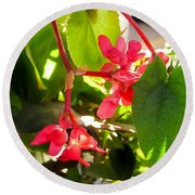 Red Begonia Peaking Through The Leaves Round Beach Towel