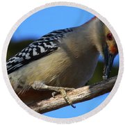 Red-bellied Woodpecker Catching Grub Round Beach Towel