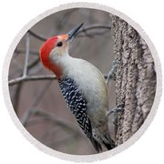 Red Bellied Woodpecker Pose Round Beach Towel