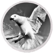 Red Billed Seagull In Black And White Round Beach Towel