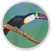 Red-billed Toucan Round Beach Towel