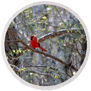 Red Bird In Dogwood Round Beach Towel