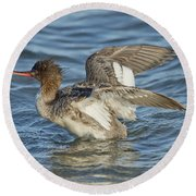 Red-breasted Merganser Round Beach Towel