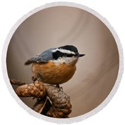 Red-breasted Nuthatch Pictures 36 Round Beach Towel