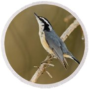Red-breasted Nuthatch Pictures 76 Round Beach Towel