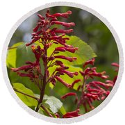 Red Buckeye - Aesculus Pavia - Wildflowers Round Beach Towel