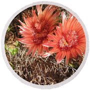 Red Cactus Round Beach Towel