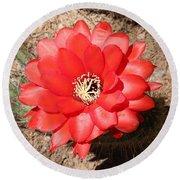 Red Cactus Flower Square Round Beach Towel