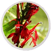 Red Cardinal Flower Round Beach Towel