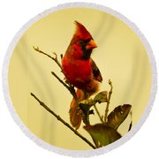Red Cardinal No. 2 - Kauai - Hawaii Round Beach Towel