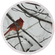 Red Cardinal On Snow Covered Tree Limb Round Beach Towel