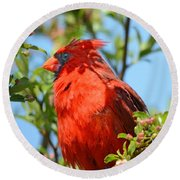 Red Cardinal Pink Blooms Round Beach Towel