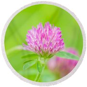 Red Clover Round Beach Towel