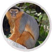 Red Colobus Monkey Round Beach Towel