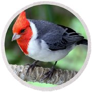 Red Crested Cardinal Round Beach Towel