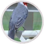 Red Crested Cardinal No 2 Round Beach Towel