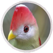 Red Crested Turaco Round Beach Towel