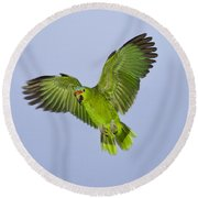 Red-crowned Parrot Round Beach Towel