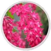 Red-flowering Currant Blossom Round Beach Towel