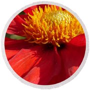 Red Dahlia Coccinea Round Beach Towel
