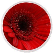 Red Daisy Round Beach Towel