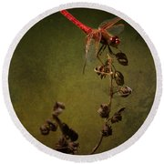 Red Dragonfly On A Dead Plant Round Beach Towel