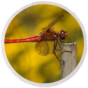 Red Dragonfly Waiting Round Beach Towel
