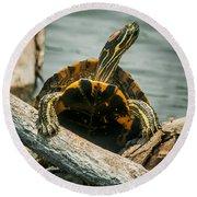 Red Eared Slider Turtle Round Beach Towel